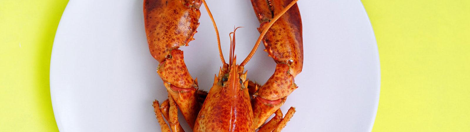 https://www.lakeshorecountryclub.com/uploads/slides/053968_lobster-lake-shore-2.jpg